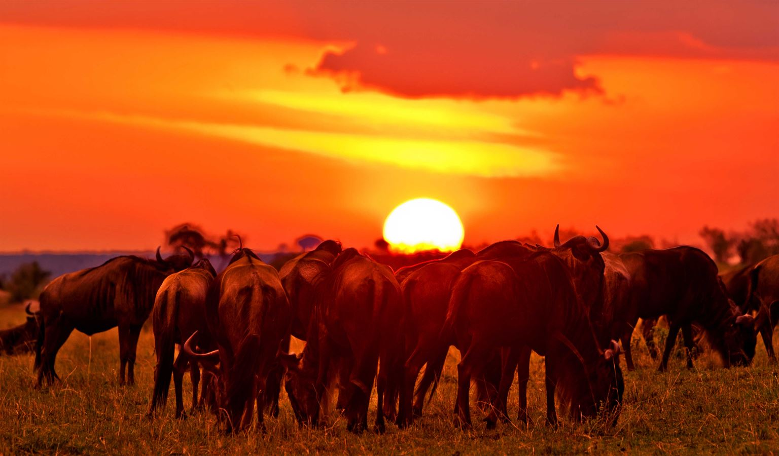 Safari to mara