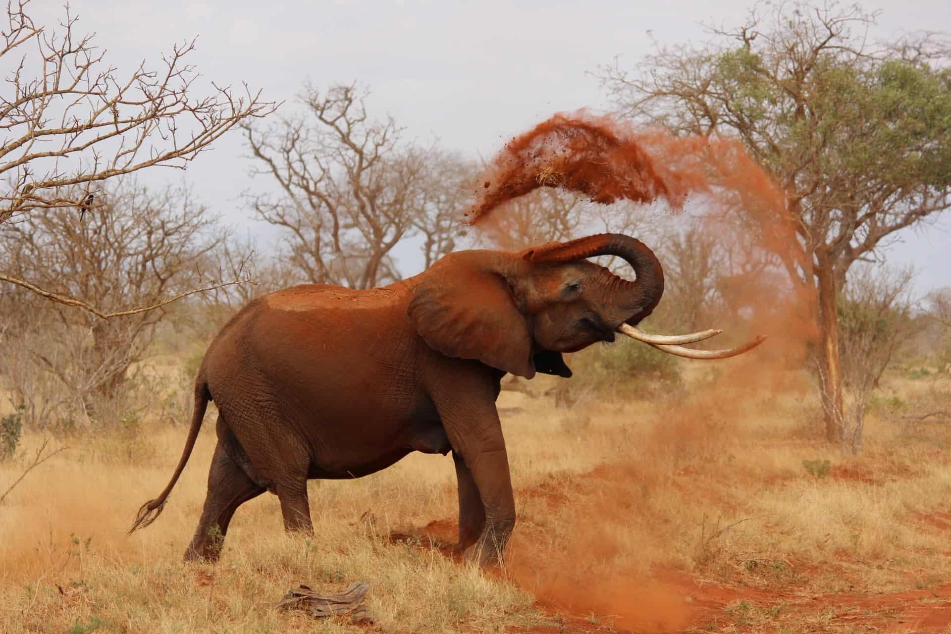 africa-animal-elephant-70080 (1)