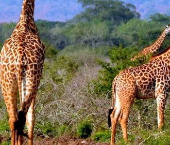 AKAGERA WILDLIFE HIGHLIGHTS