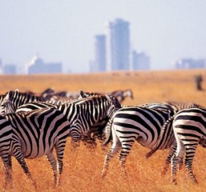 DAYTRIP TO NAIROBI NATIONAL PARK