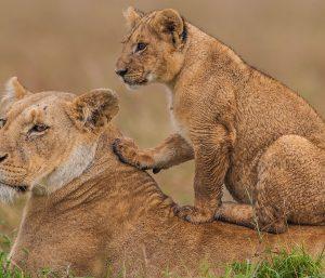 Kenya Wilderness Experience