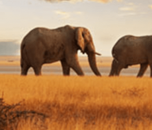 Kenya Wilderness