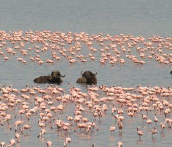Kenya plains