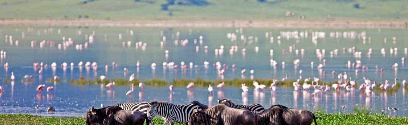 Lake Manyara Ngorongoro Crater (1)