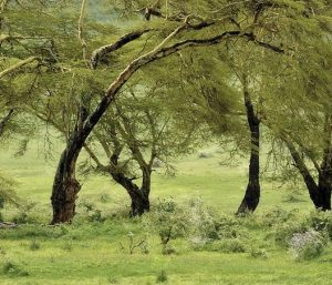 Lake manyara Serengeti