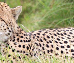 Mara Safari