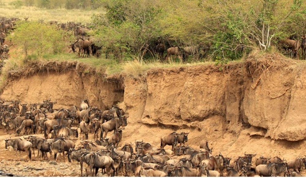Migration Trail Safari