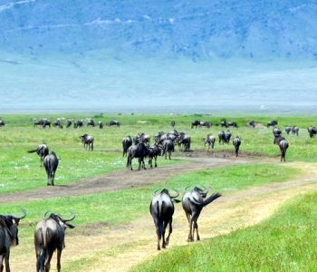 Ngorongoro Manyara Safari