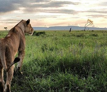 Tanzania Nothern Experience